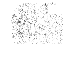 Ham-feature-icon-home-page