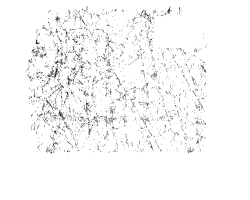 chicken-feature-icon-home-page
